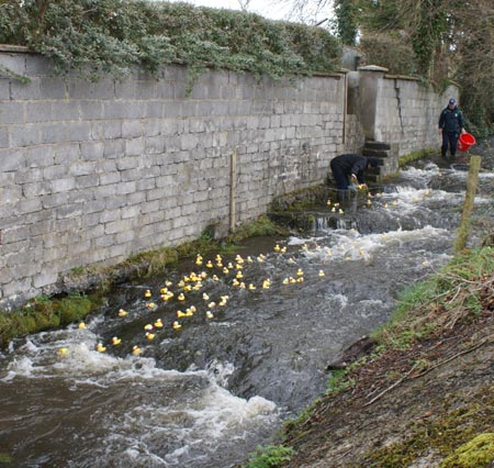 The 2010 Duck Race.